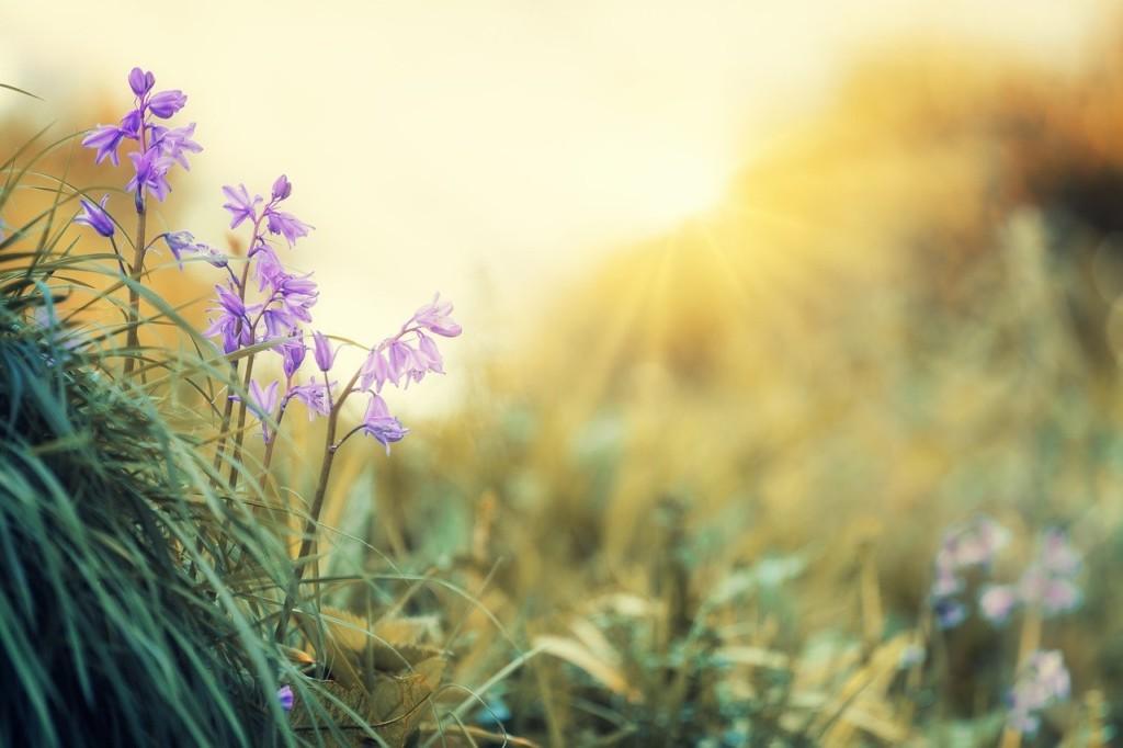 I fiori di Acqua di sole